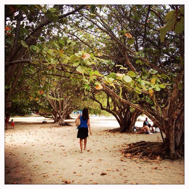 Walking through the mangroves to get to a public beach in Trinidad